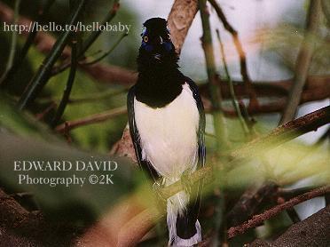 HoppyBird Picture