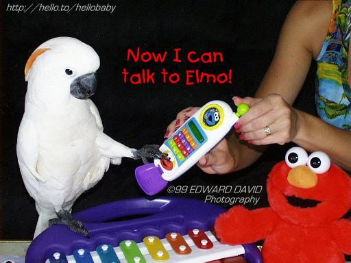 Call Elmo? Picture