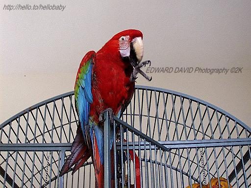 Sammy on His Cage Picture