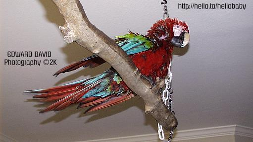 Wet Sammy on Perch Picture 2